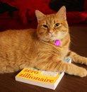 Brooke Harker's cat on my book
